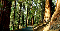 Septembre : Sequoia National Park